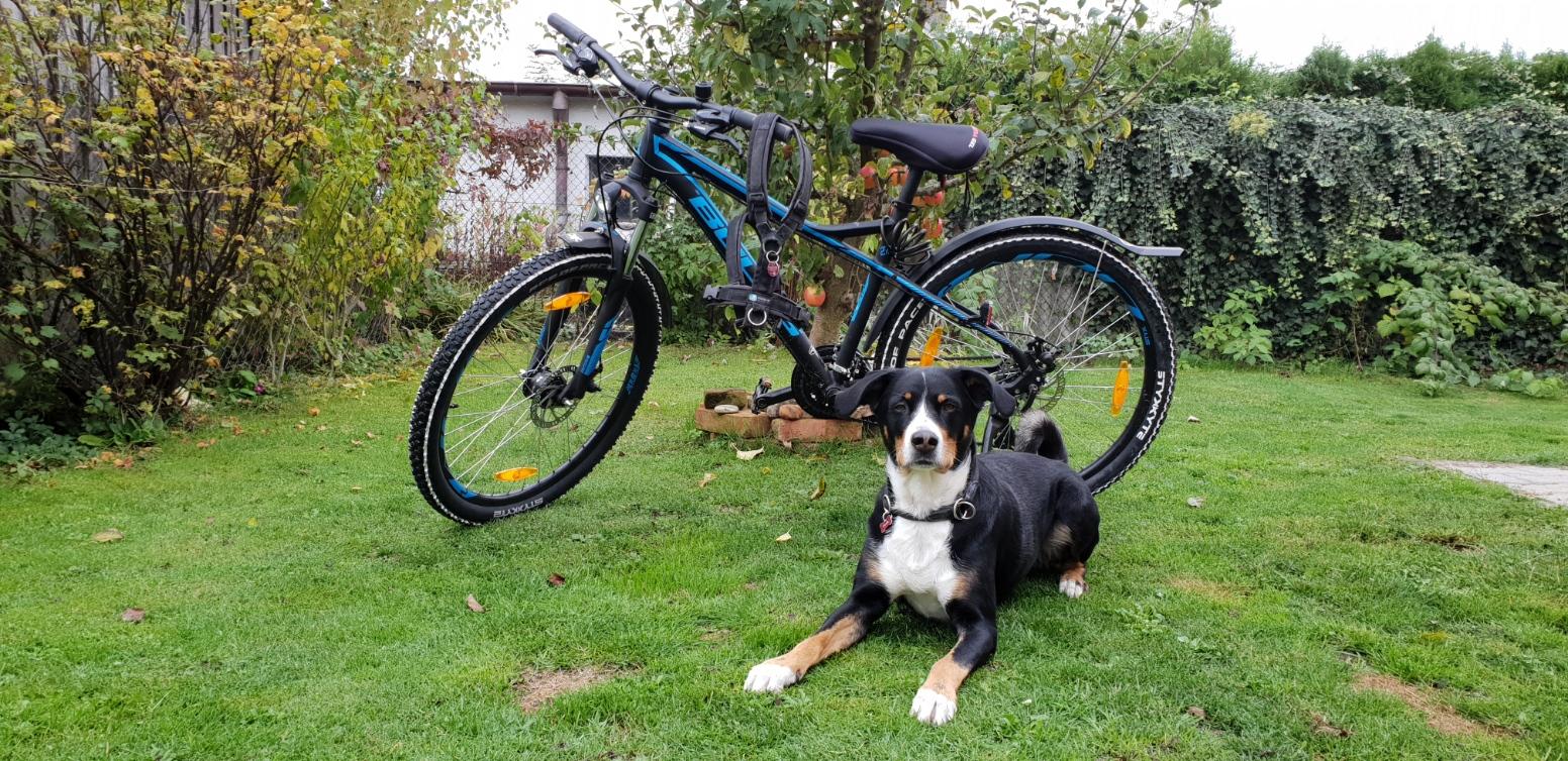 Fahrradfahren-mit-Hund Hintergrund